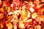 fall-leaves-background-1013tm-bkg-45