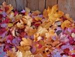 seasons-fall-leaves-background-1013tm-pic-1586
